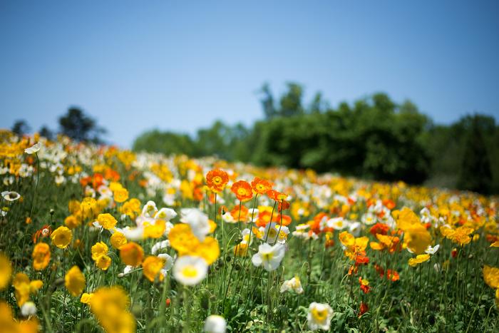 flower-free-photo57.jpg